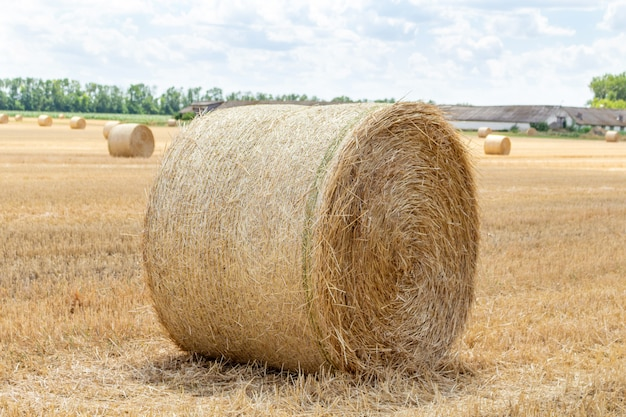 Harvested cereal wheat barley rye grain field, with haystacks straw bales stakes round shape