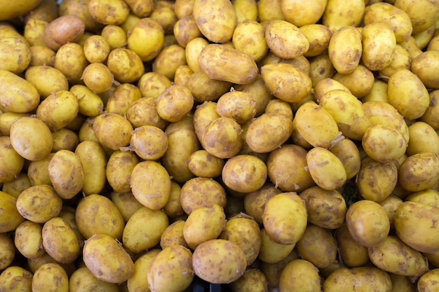 갓 딴 어린 감자 수확