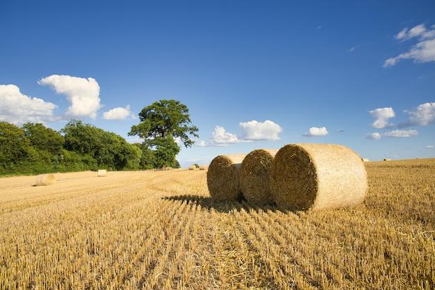 Поле убранных зерновых в солнечный день с небольшими облаками