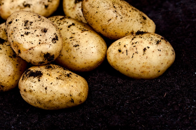 Harvested potatoes closeup ond soil