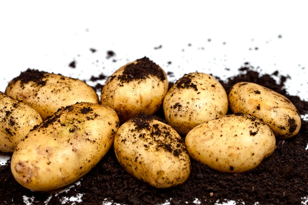 Harvested potatoes and soil closeup on white