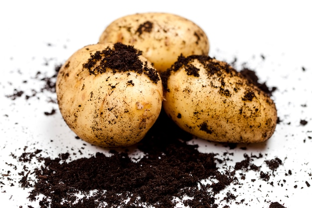 Harvested potatoes and soil isolated on white