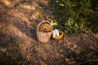 Harvested vegetables in the basket and bowl