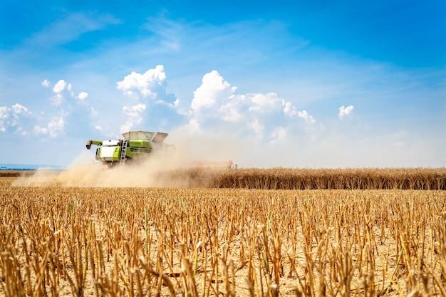 Комбайн собирает спелое зерно в поле.