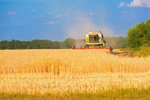 Комбайн для уборки урожая пшеничного поля. зерноуборочный комбайн сельскохозяйственная машина, собирающая золотые спелые поля пшеницы. сельское хозяйство