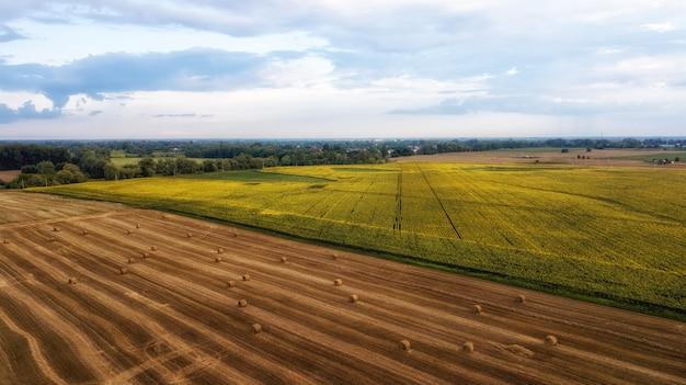 분야에서 일하는 수확기 기계. 황금 익은 밀밭 수확 수확기 농업 기계를 결합합니다. 농업. 조감도. 위에서.