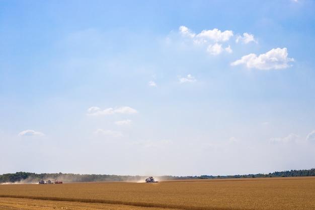 Комбайны в поле с пшеницей работают на уборке урожая