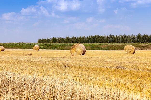 穀物の収穫は、収穫後のわらが俵に積み上げられた農地を俵します