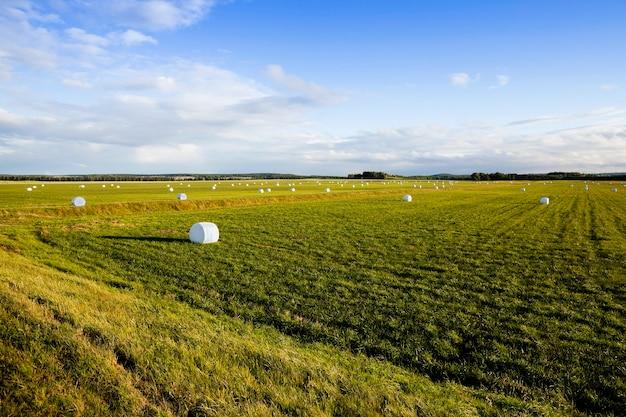 Сбор травы для кормления животных на ферме