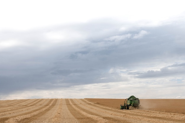 A harvesting machine for wheat is at work.harvester golden ripe wheat harvester combine harvesting agricultural machinery harvesteragriculture