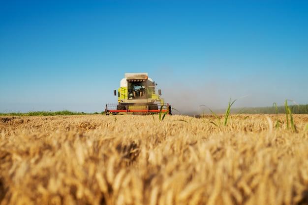 Уборочная машина работает на поле в солнечное утро. концепция сельского хозяйства.