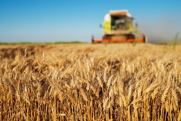 晴れた朝にフィールドで働く収穫機。農業のコンセプトです。