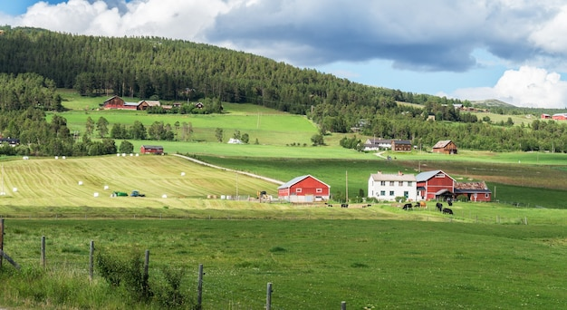 Harvesting and packing of hay on a farm, folldal, norway