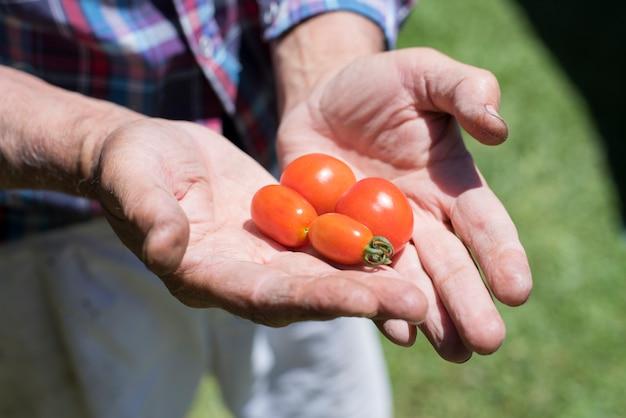 庭でトマトを収穫する