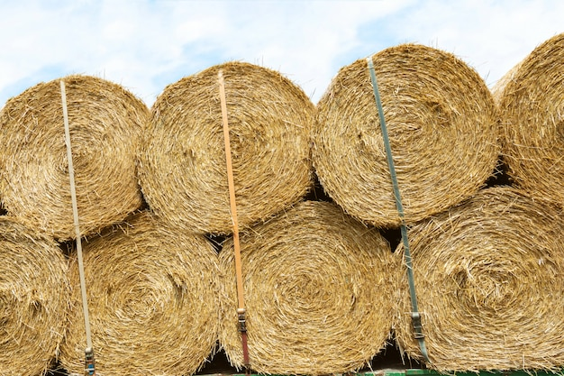 Harvesting and transportation of crops in the agricultural industry.