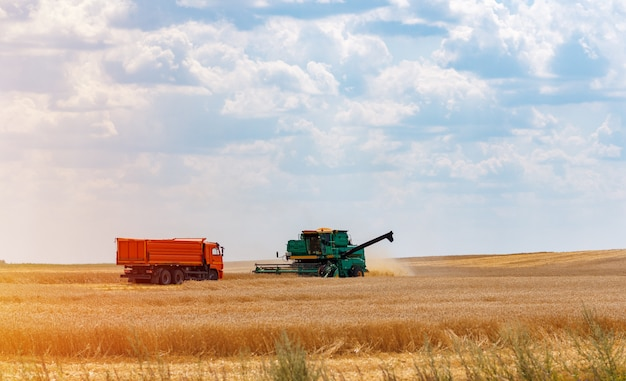 小麦の収穫。収穫機は畑の小麦を取り除きます