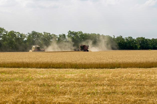 Harvesting wheat with agricultural machinery in the field