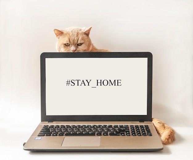 Слова hashtag stay home на экране компьютера и кот. концепция самостоятельного карантина в домашних условиях как профилактическая мера