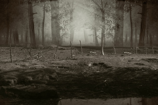 霧とドラマチックなシーンの幽霊の森