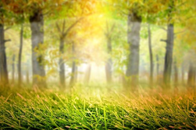 霧と日光の背景を持つ幽霊の森。ハロウィーンのコンセプト