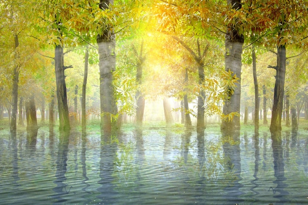 Haunted forest with lake and sunlight