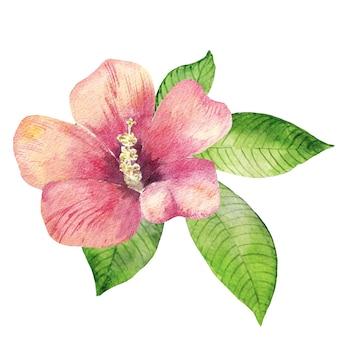 Hawaiian hibiscus flower