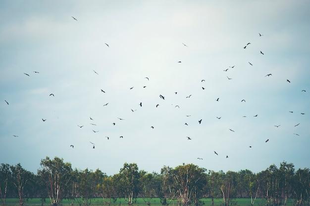 Hawk habitat in nakhonnayok, thailand