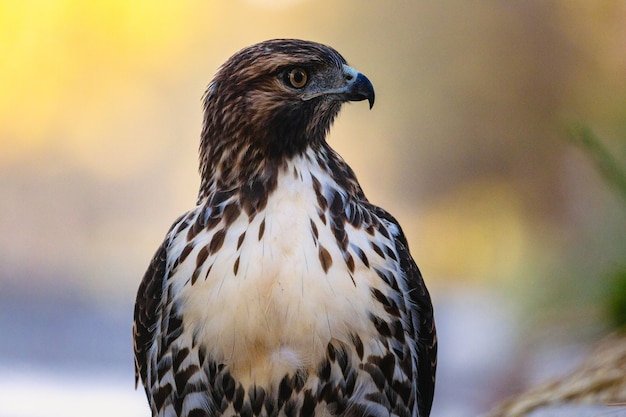 Hawk resting in nature