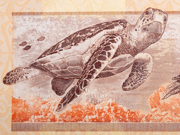 Hawksbill sea turtle a portrait from malaysian money
