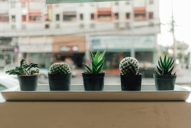 Haworthia в маленьком горшке на краю окна.