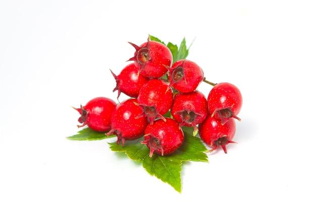 サンザシの果実の葉、クローズアップ