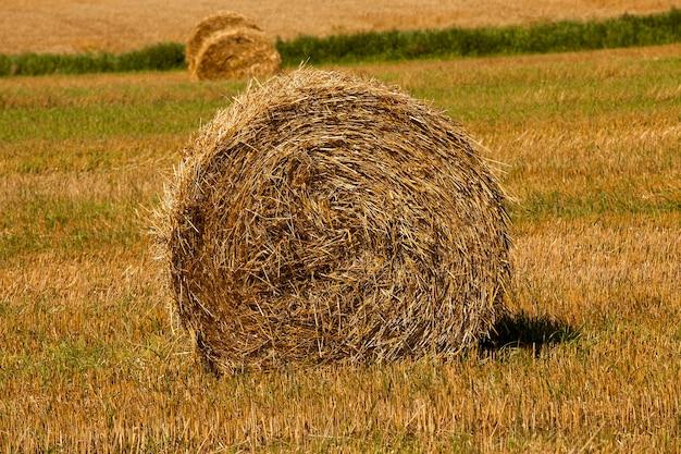 Тюк сена сфотографирован крупным планом на фоне срезанных стеблей травы и зеленой травы