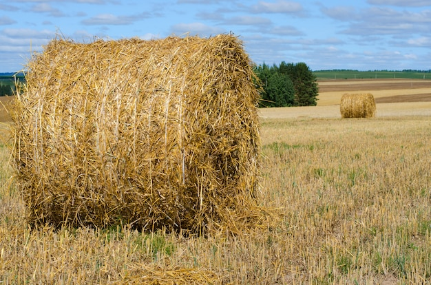 Hay bale. rural landscape with blue sky. harvesting straw in the meadow