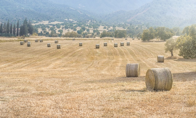 Hay bales in a field of dried grass in hot summer day with mountains background
