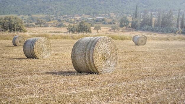 멀리 지중해 시골 풍경이 있는 잘린 마른 풀밭에 있는 건초 더미
