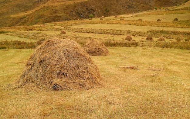 Тюки сена в поле золотой осени в сельской местности кавказа