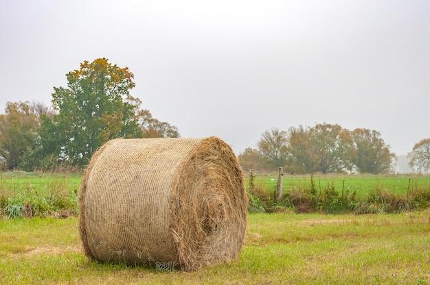 ニュージーランド南島で撮影された干し草のbalbal
