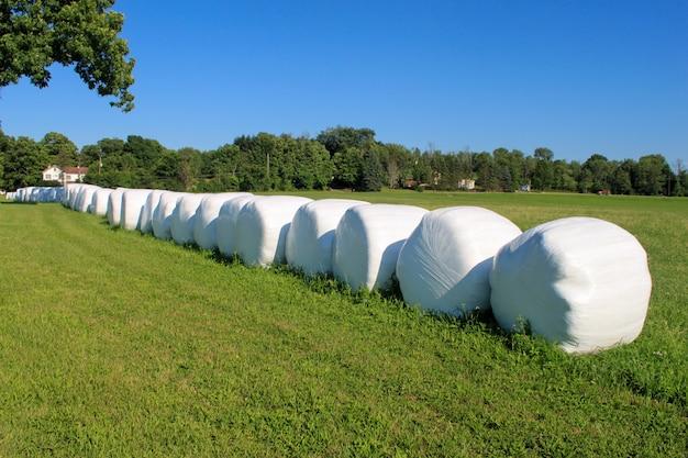 干し草の俵は農場の晴れた日に包まれて並んでいます