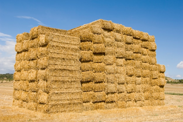 Hay bundles stacked up in the middle of a deserted and dry field