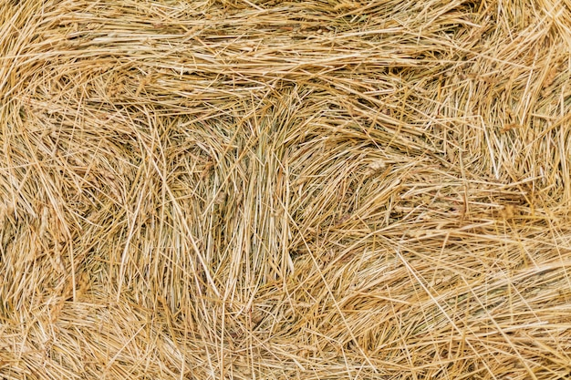 Hay forage for livestock