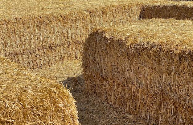 Сено в тюке в крупный солнечный день. пищевой продукт для сельскохозяйственных животных, концепция сельского хозяйства.