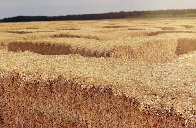 Сено в тюке в солнечный день крупным планом пищевой продукт для концепции сельского хозяйства сельскохозяйственных животных