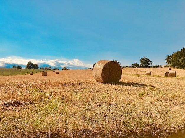 昼間の広大な畑の干し草