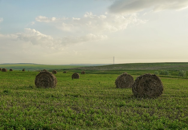 Hay rolls against a green field