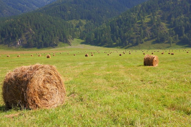 Hay rolls in the background of mountains