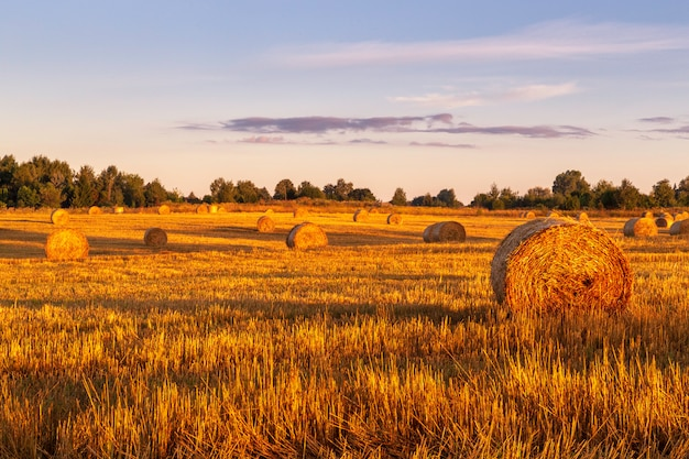 Hay-rolls on meadow early morning at sunrise