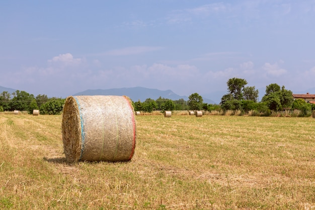 干し草はイタリア北部の村の畑を転がります。美しい晴れた夏の日