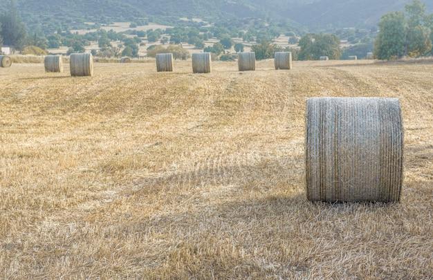 잘라 말린 풀밭에 건초 더미. 여름 수확 풍경, 소프트 포커스