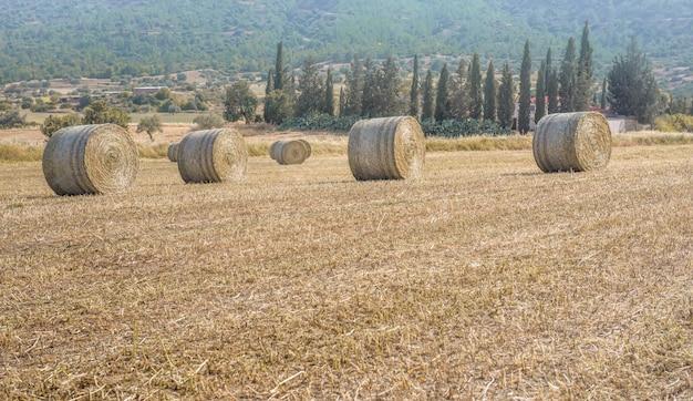 농장과 사이프러스 나무를 배경으로 자른 마른 풀밭에 건초 더미