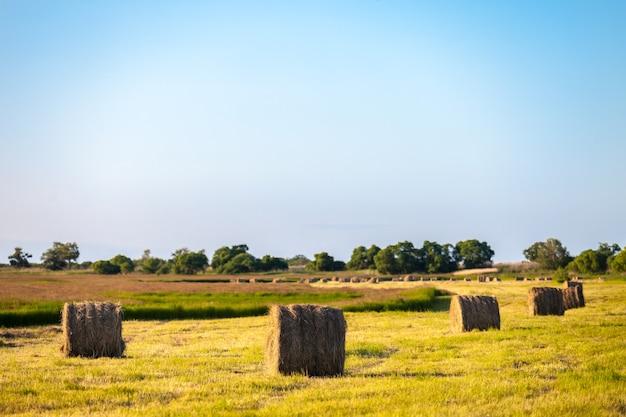 夕方に畑に干し草が山積み